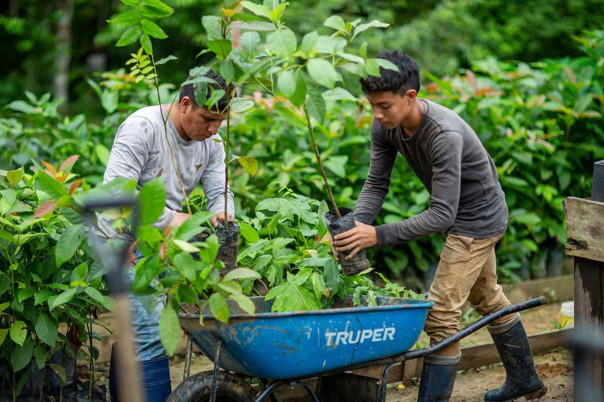 Vacancies for Volunteer Work in the Amazon - Find Out How to Apply